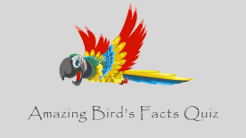 amazing-birds-facts