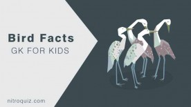 bird-facts